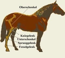 Beinbruch beim Pferd / Probleme und Chancen auf Genesung